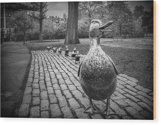 Make Way For Ducklings In Boston Black And White Wood Print