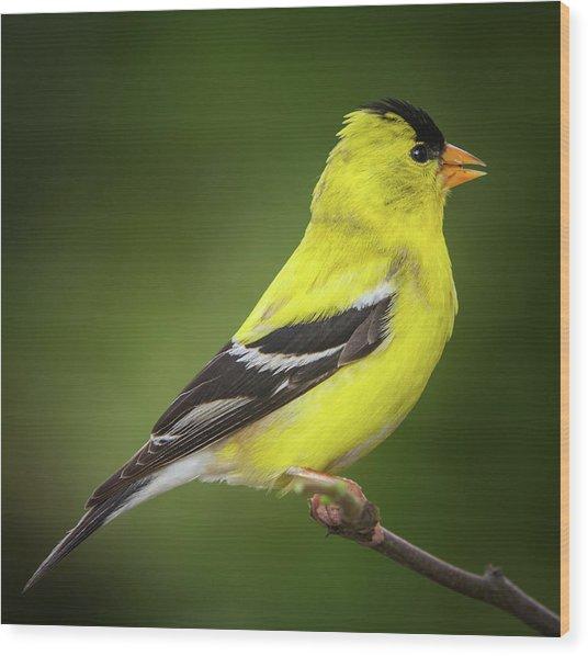 Male American Golden Finch On Twig Wood Print