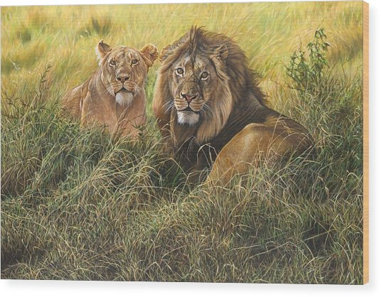 Male And Female Lion Wood Print