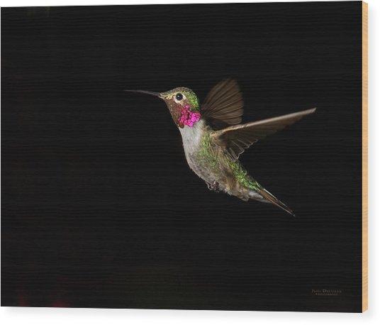 Male Broad-tailed Hummingbird Wood Print
