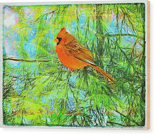 Male Cardinal In Juniper Tree Wood Print