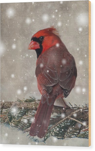 Male Cardinal In Snow #1 Wood Print