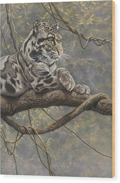 Male Clouded Leopard Wood Print