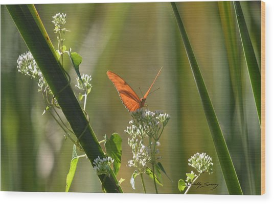 Male Julia Heliconia Butterfly Wood Print