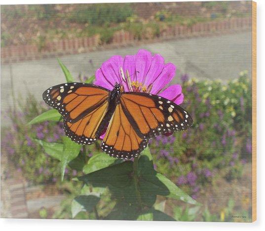 Male Monarch  Wood Print