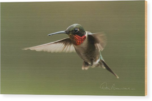 Male Ruby-throated Hummingbird 6794 Wood Print