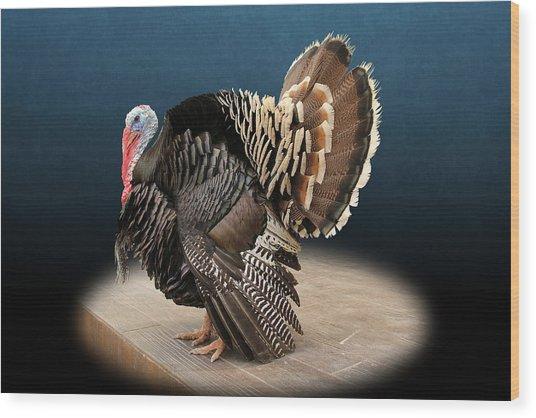 Male Turkey Strutting Wood Print