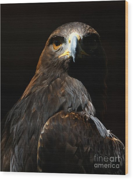 Maleficent Golden Eagle Wood Print