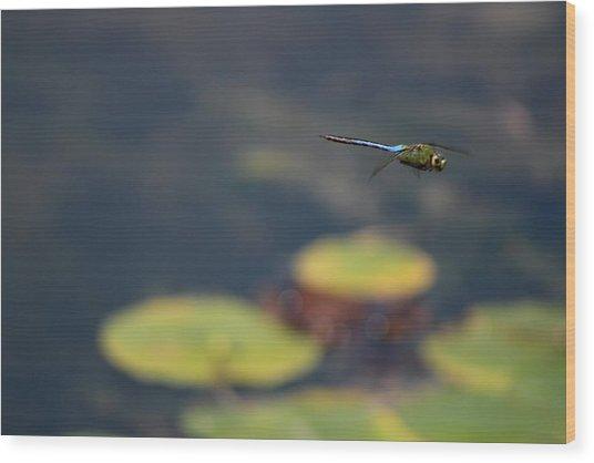 Malibu Blue Dragonfly Flying Over Lotus Pond Wood Print