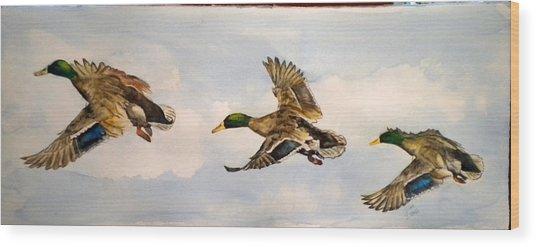 Mallard 3 In Flight Wood Print