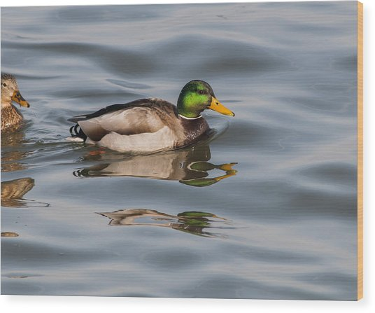 Mallards And Reflection Wood Print
