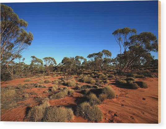 Mallee And Spinifex Wood Print by Tony Brown