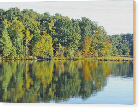 Mallows Bay Wood Print