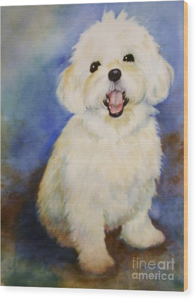Maltese Named Ben Wood Print