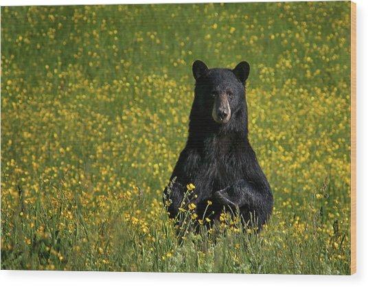 Mama Bear Wood Print