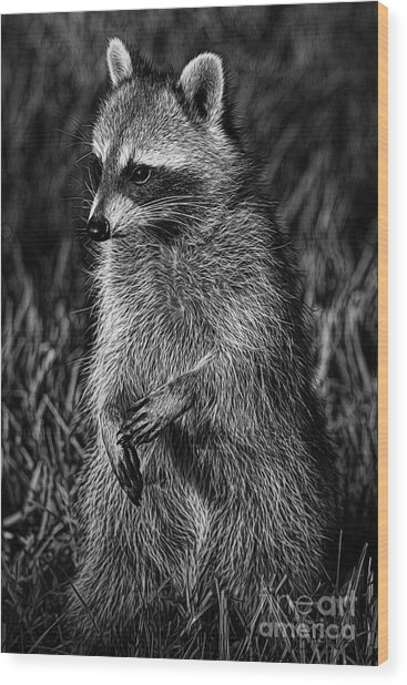 Mama Raccoon Wood Print