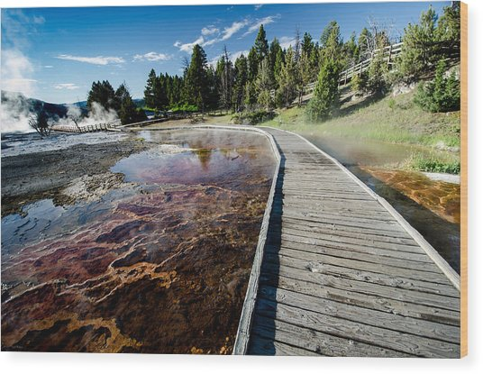 Mammoth Hot Springs Boardwalk Wood Print