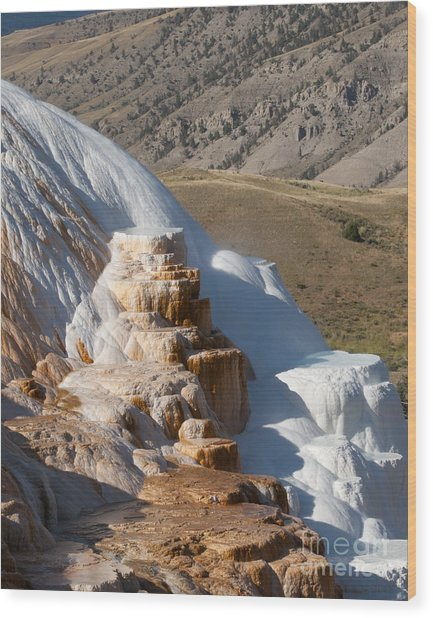 Mammoth Hot Springs  Wood Print