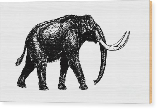Mammoth Tee Wood Print