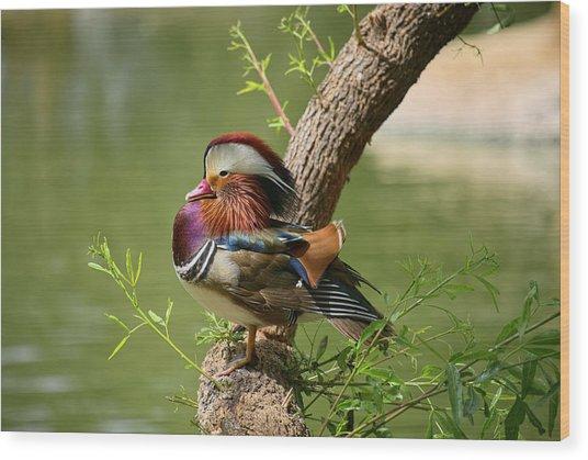 Mandarin Duck On Tree Wood Print