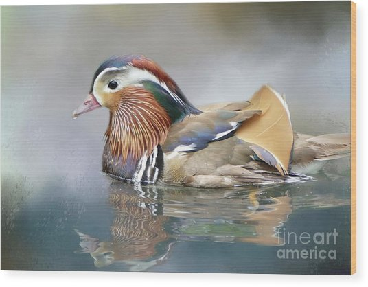 Mandarin Duck Swimming Wood Print