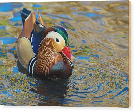 Mandarin Duck Swirls Wood Print