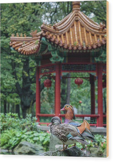 Mandarin Ducks At Pavilion Wood Print