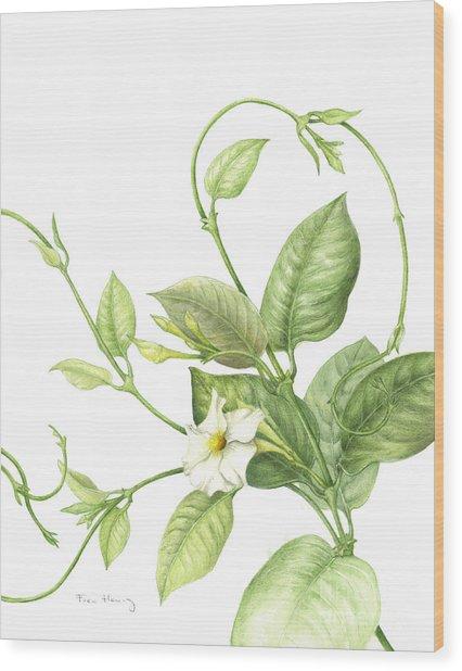 Mandevilla Vine Wood Print by Fran Henig