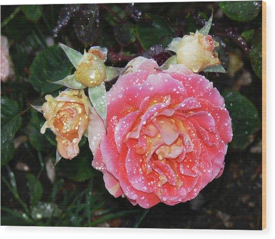 Mango Rose Wood Print