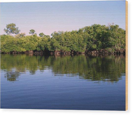 Mangrove Forest Wood Print by Steven Scott