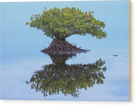Mangrove Reflection Wood Print