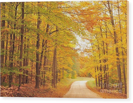 Manisee National Forest In Autumn Wood Print