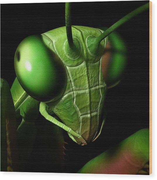 Mantis Head Wood Print