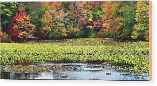 Many Colors Of Autumn Wood Print