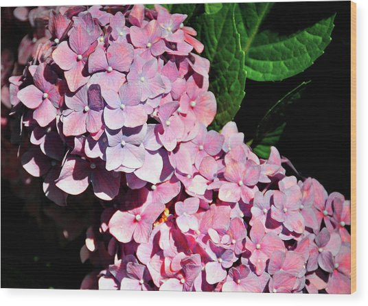 Many Petals Wood Print by JAMART Photography