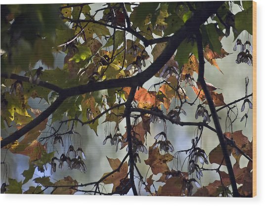 Maple Color Wood Print by Ross Powell