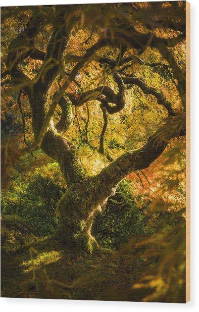 Maple Fairytale Wood Print