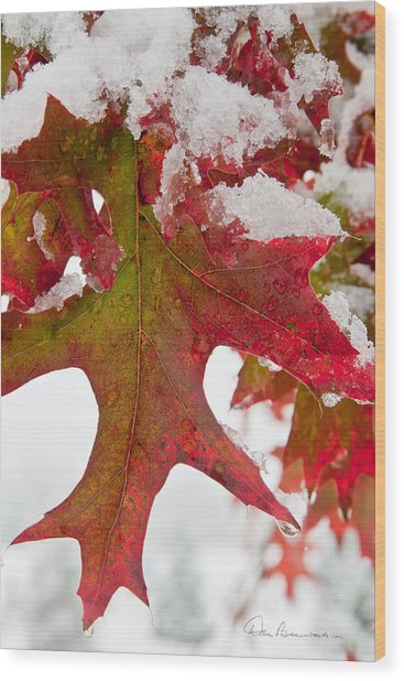 Maple Leaf And Snow 7467 Wood Print