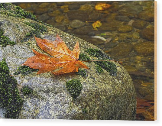 Maple Leaf On A Rock Wood Print
