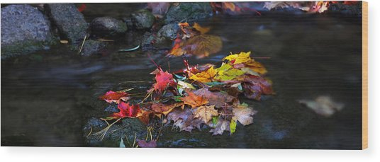 Maple Leaves-0001 Wood Print by Sean Shaw