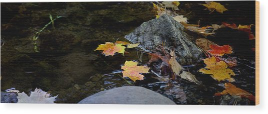 Maple Leaves-0006 Wood Print by Sean Shaw