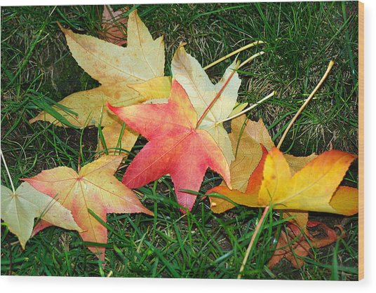 Maple Leaves Fallen On Green Grass Wood Print