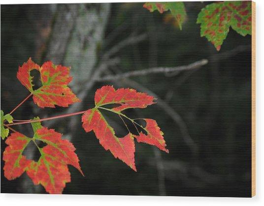 Maple Leaves Wood Print by Steven Scott