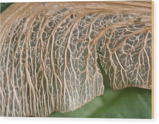Maple Seed 177 Wood Print