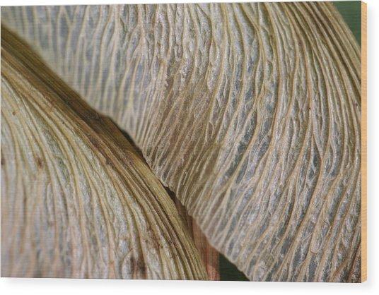 Maple Seed 202 Wood Print