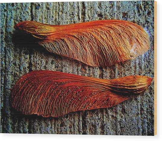 Maple Seed Pair Wood Print