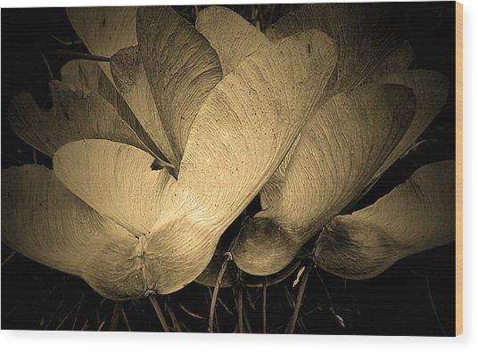 Maple Seeds 2011 Wood Print
