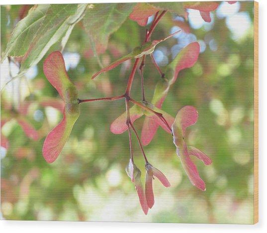 Maple Seeds Wood Print