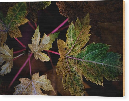 Maple Spatter Wood Print by Trudi Southerland