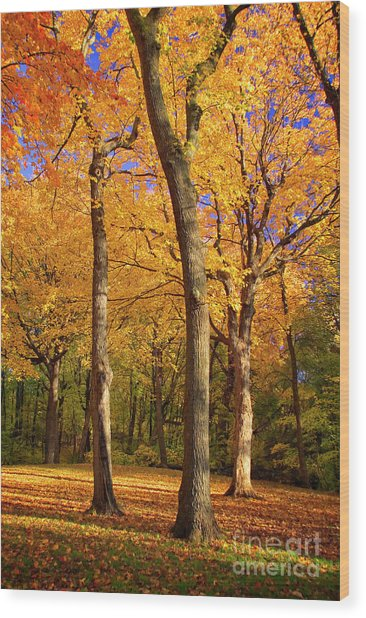 Wood Print featuring the photograph Maple Treo by Scott Kemper